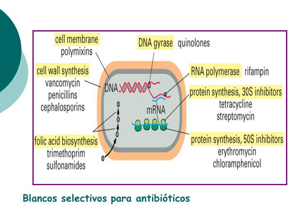 Blancos selectivos para antibióticos