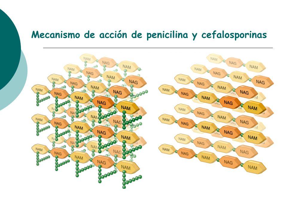 Mecanismo de acción de penicilina y cefalosporinas