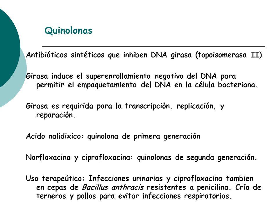 Quinolonas Antibióticos sintéticos que inhiben DNA girasa (topoisomerasa II) Girasa induce el superenrollamiento negativo del DNA para permitir el emp