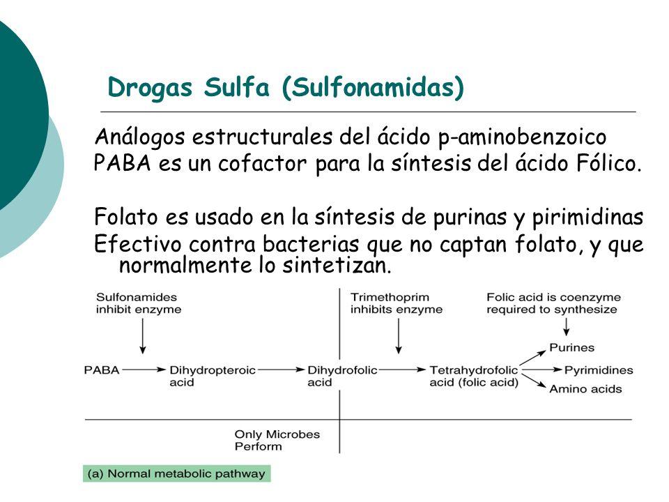 Drogas Sulfa (Sulfonamidas) Análogos estructurales del ácido p-aminobenzoico PABA es un cofactor para la síntesis del ácido Fólico. Folato es usado en