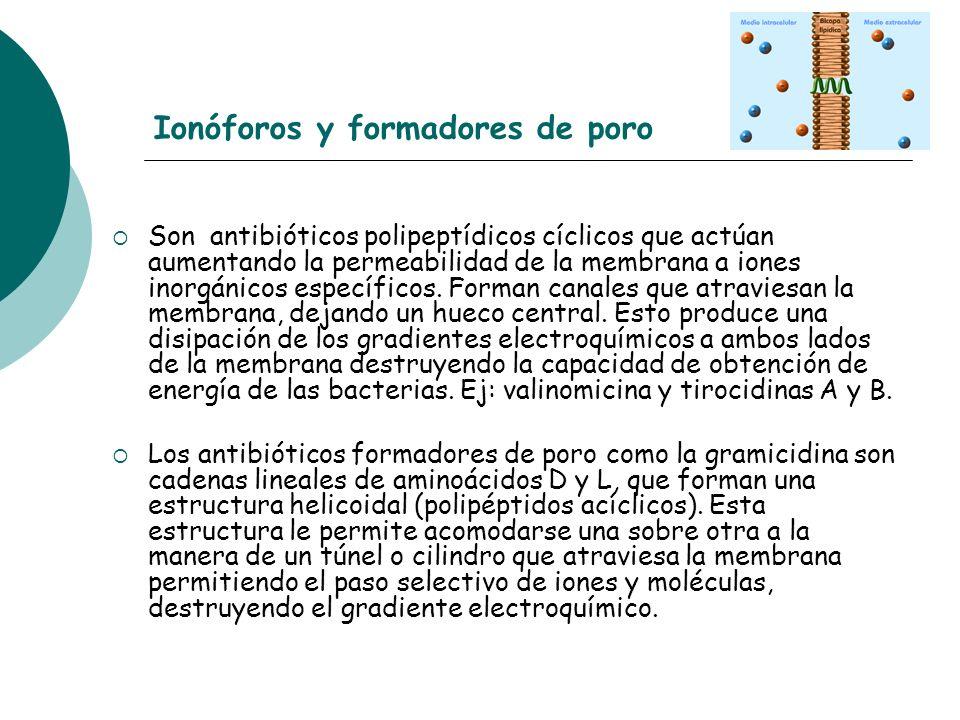 Ionóforos y formadores de poro Son antibióticos polipeptídicos cíclicos que actúan aumentando la permeabilidad de la membrana a iones inorgánicos espe