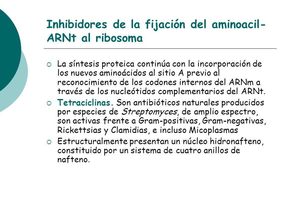 Inhibidores de la fijación del aminoacil- ARNt al ribosoma La síntesis proteica continúa con la incorporación de los nuevos aminoácidos al sitio A pre