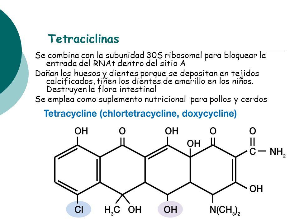 Tetraciclinas Se combina con la subunidad 30S ribosomal para bloquear la entrada del RNAt dentro del sitio A Dañan los huesos y dientes porque se depo