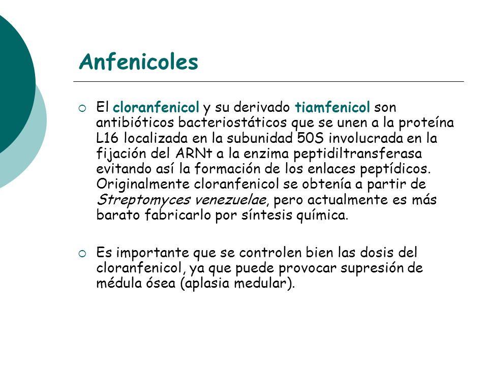 Anfenicoles El cloranfenicol y su derivado tiamfenicol son antibióticos bacteriostáticos que se unen a la proteína L16 localizada en la subunidad 50S