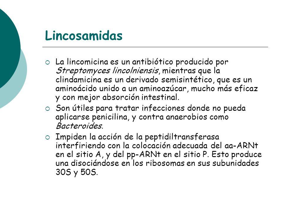 Lincosamidas La lincomicina es un antibiótico producido por Streptomyces lincolniensis, mientras que la clindamicina es un derivado semisintético, que