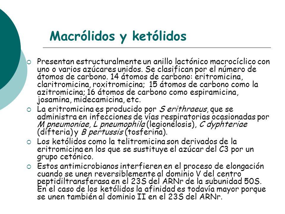 Macrólidos y ketólidos Presentan estructuralmente un anillo lactónico macrocíclico con uno o varios azúcares unidos. Se clasifican por el número de át
