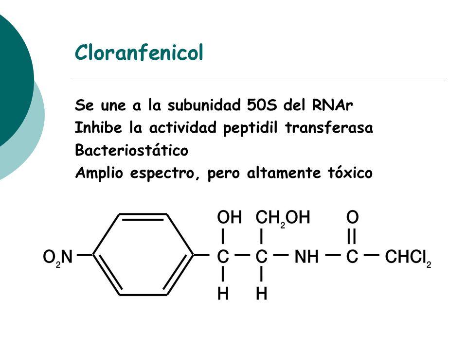 Cloranfenicol Se une a la subunidad 50S del RNAr Inhibe la actividad peptidil transferasa Bacteriostático Amplio espectro, pero altamente tóxico