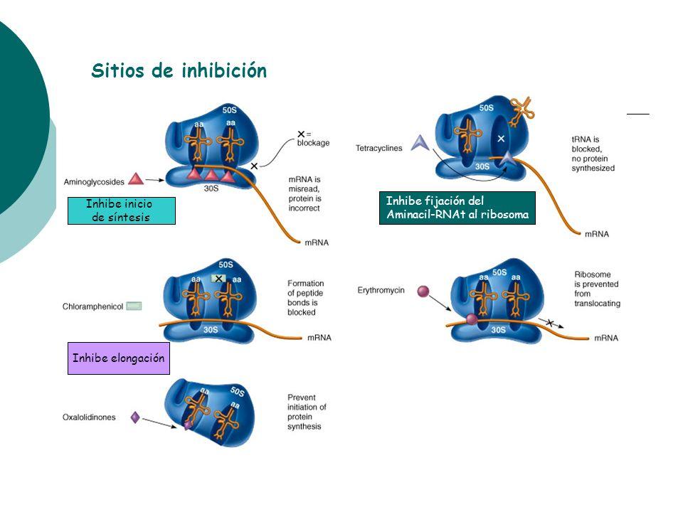 Sitios de inhibición Inhibe inicio de síntesis Inhibe fijación del Aminacil-RNAt al ribosoma Inhibe elongación