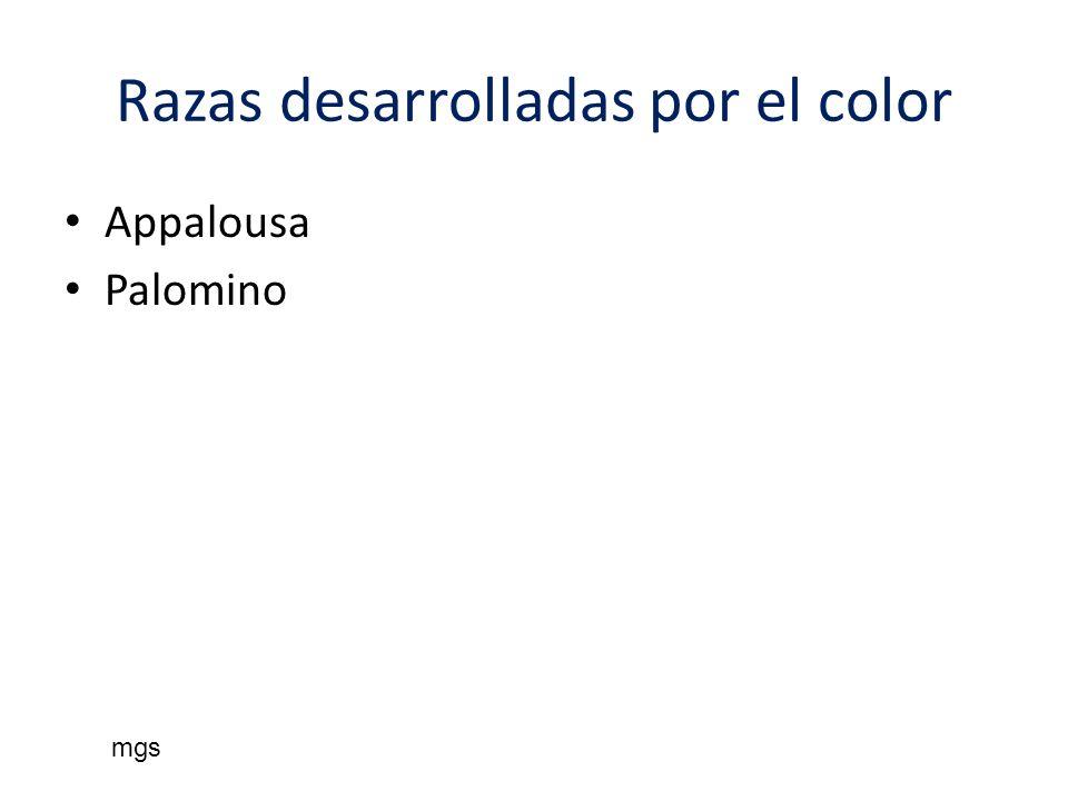 Razas desarrolladas por el color Appalousa Palomino mgs