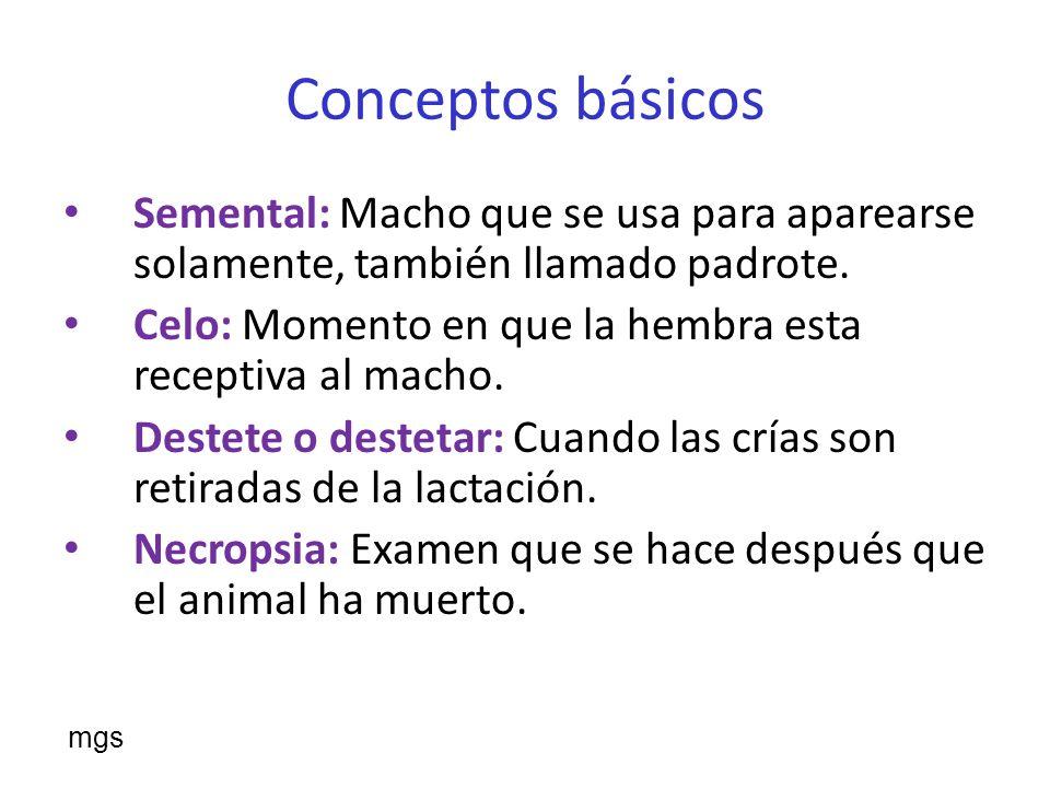 Conceptos básicos Semental: Macho que se usa para aparearse solamente, también llamado padrote.