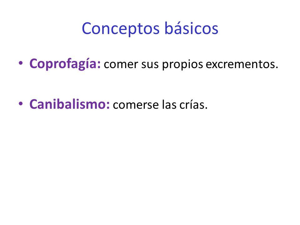 Conceptos básicos Coprofagía: comer sus propios excrementos. Canibalismo: comerse las crías.