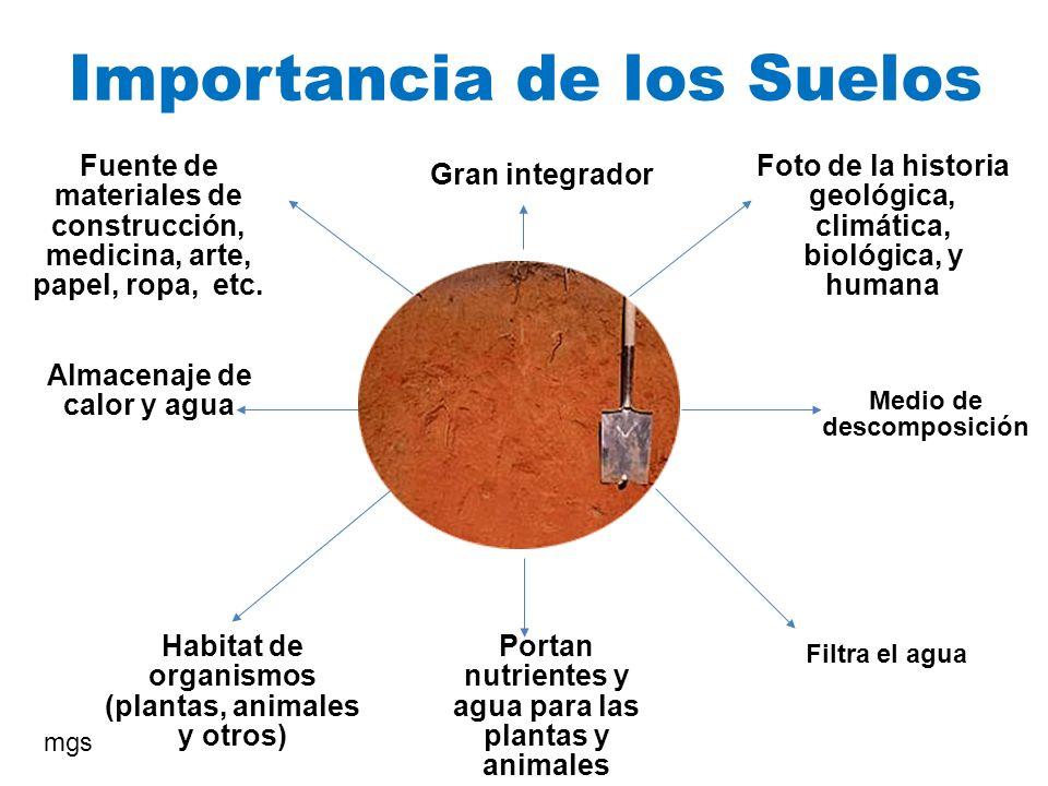 Importancia de los Suelos Medio de descomposición Gran integrador Portan nutrientes y agua para las plantas y animales Habitat de organismos (plantas,