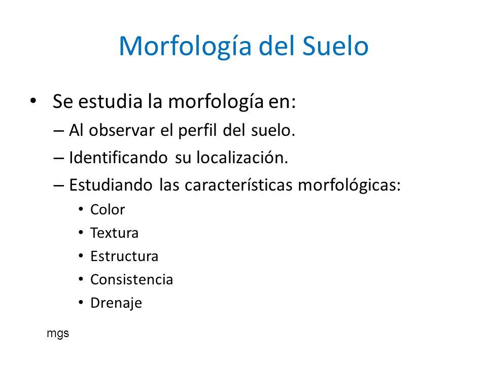 Morfología del Suelo Se estudia la morfología en: – Al observar el perfil del suelo. – Identificando su localización. – Estudiando las características
