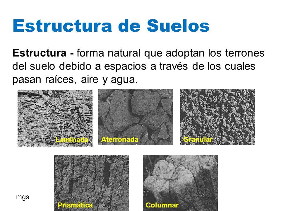 Estructura de Suelos Estructura - forma natural que adoptan los terrones del suelo debido a espacios a través de los cuales pasan raíces, aire y agua.