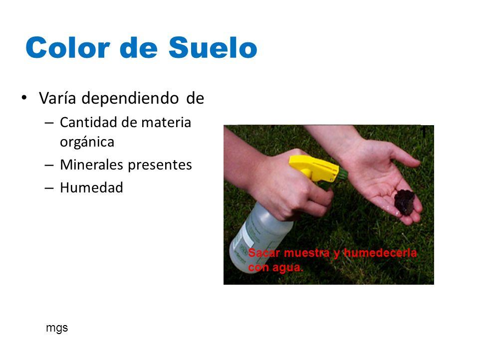 Color de Suelo 3 Examinar la muestra de espalda al sol. 2 Aguántelo entre su pulgar y el índice 4 1 Sacar muestra y humedecerla con agua. 1 Varía depe