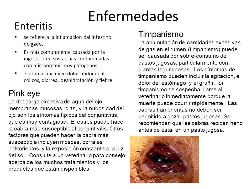 Enfermedades Enteritis se refiere a la inflamación del intestino delgado. Es más comúnmente causada por la ingestión de sustancias contaminadas con mi