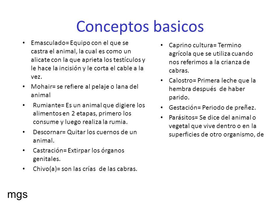 Conceptos basicos Caprino cultura= Termino agrícola que se utiliza cuando nos referimos a la crianza de cabras. Calostro= Primera leche que la hembra