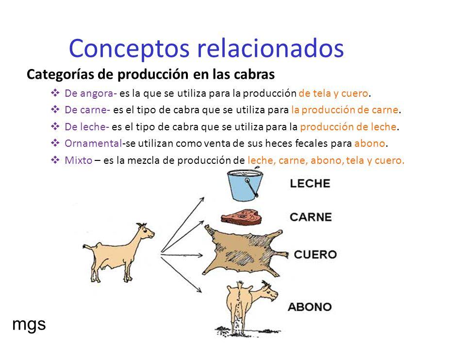 Conceptos relacionados Categorías de producción en las cabras De angora- es la que se utiliza para la producción de tela y cuero. De carne- es el tipo