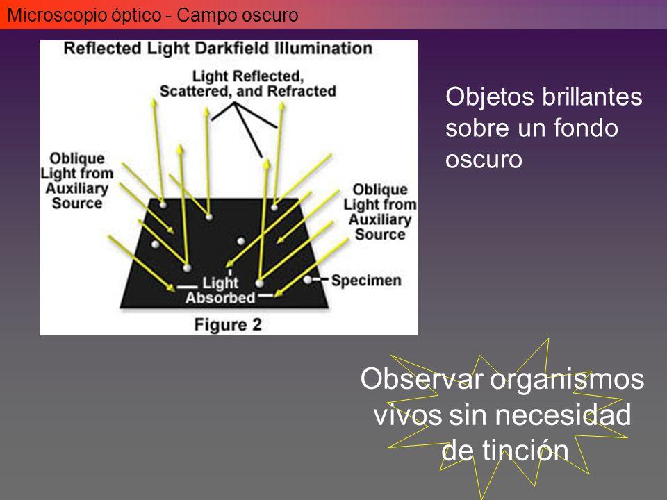 Microscopio óptico - Campo oscuro Observar organismos vivos sin necesidad de tinción Objetos brillantes sobre un fondo oscuro