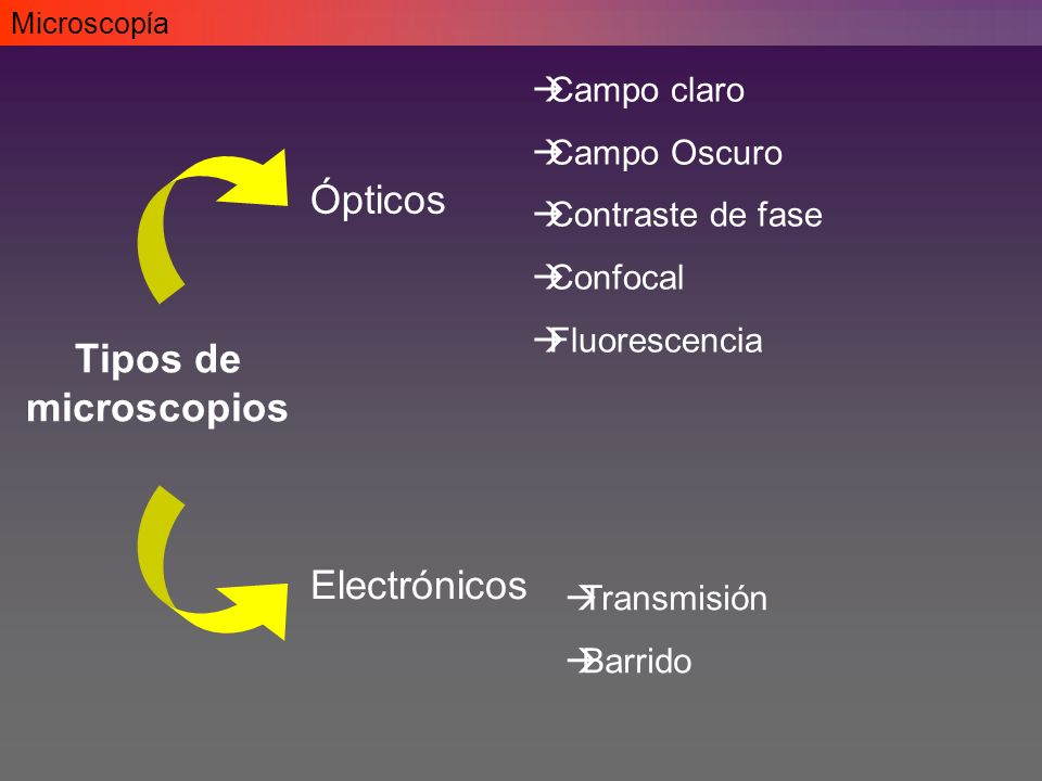 Tipos de microscopios Ópticos Electrónicos Campo claro Campo Oscuro Contraste de fase Confocal Fluorescencia Transmisión Barrido Microscopía