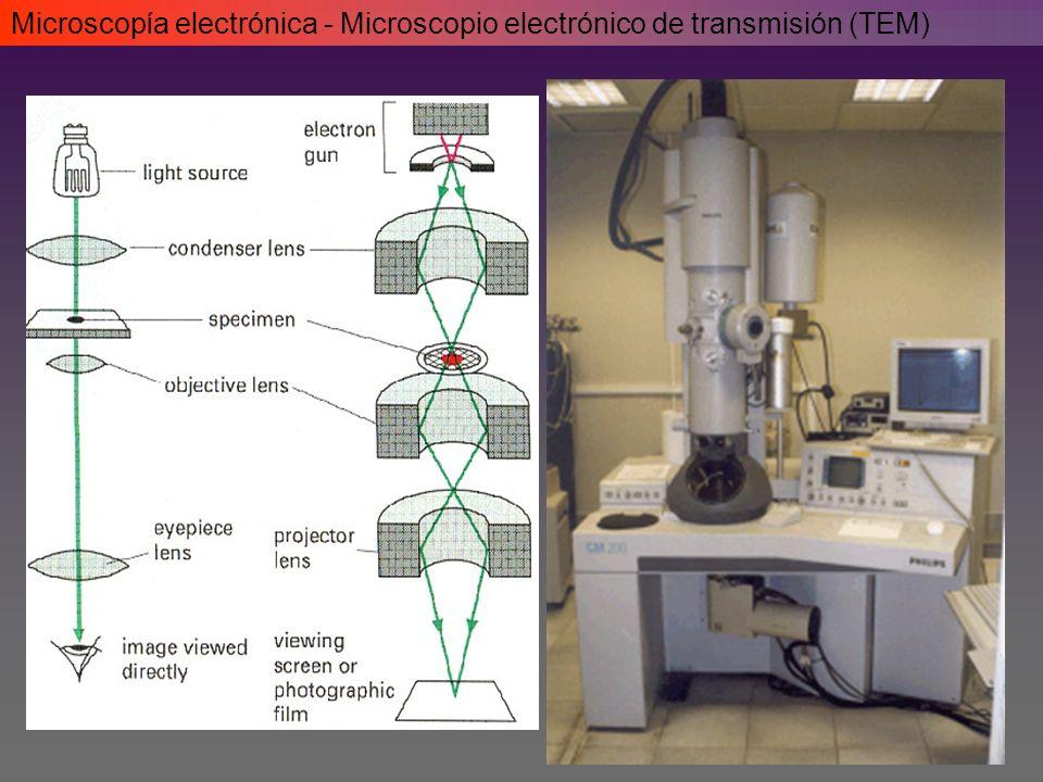 Microscopía electrónica - Microscopio electrónico de transmisión (TEM)