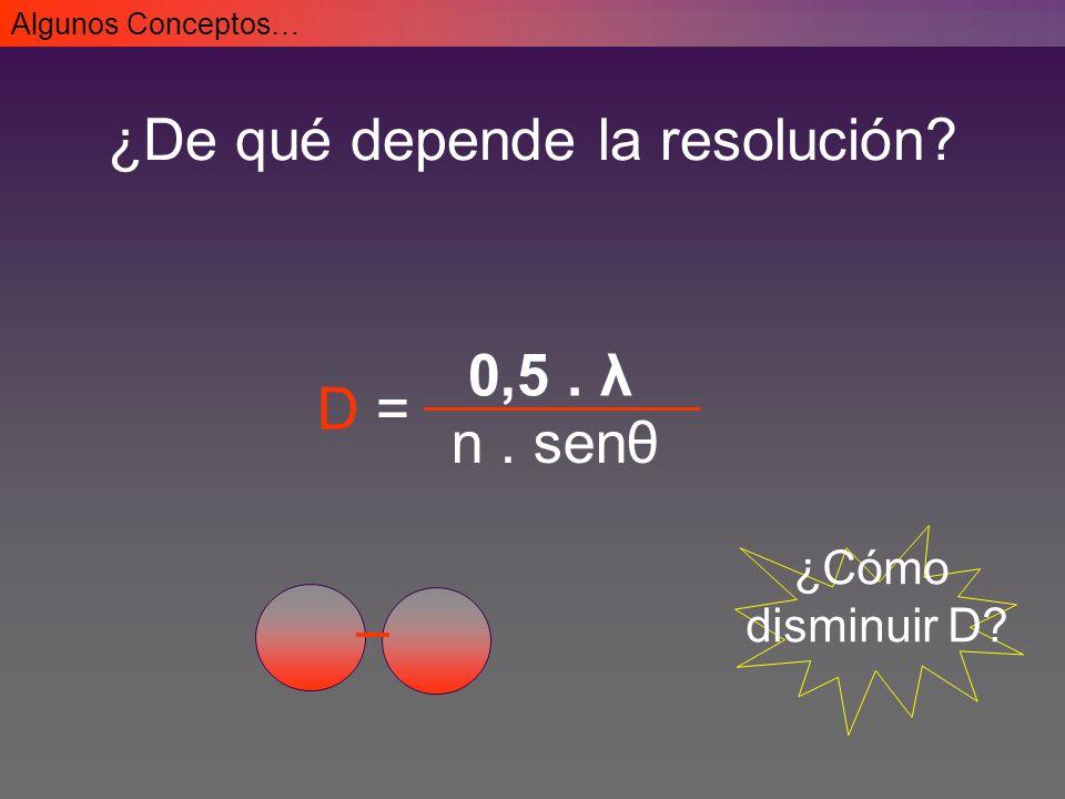N-myc/CD56 Rat neurons Inmunofluorescencia