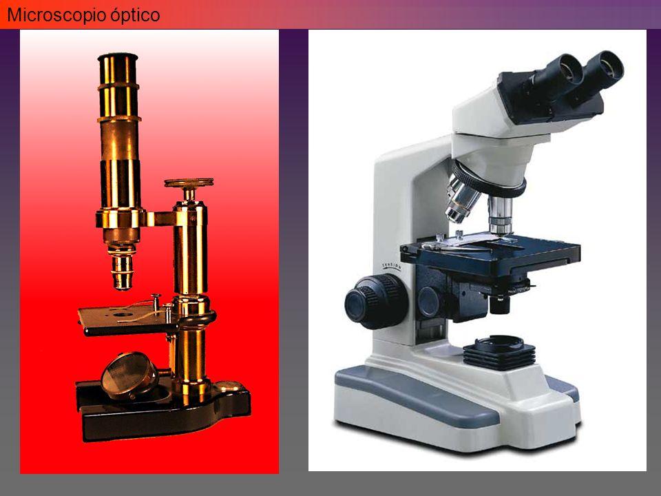 Microscopio óptico - Campo claro Eosinofilia
