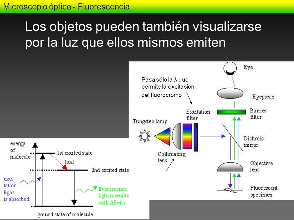 Los objetos pueden también visualizarse por la luz que ellos mismos emiten Microscopio óptico - Fluorescencia Restringe infrarrojo Pasa sólo la λ que