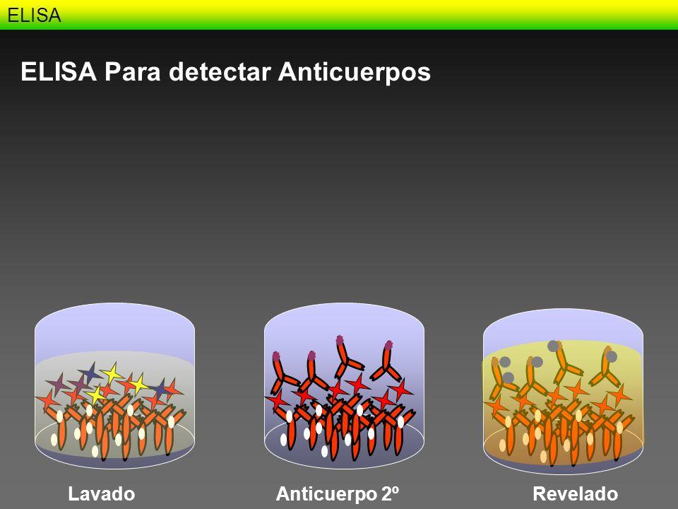 ELISA ELISA Para detectar Anticuerpos LavadoAnticuerpo 2ºRevelado