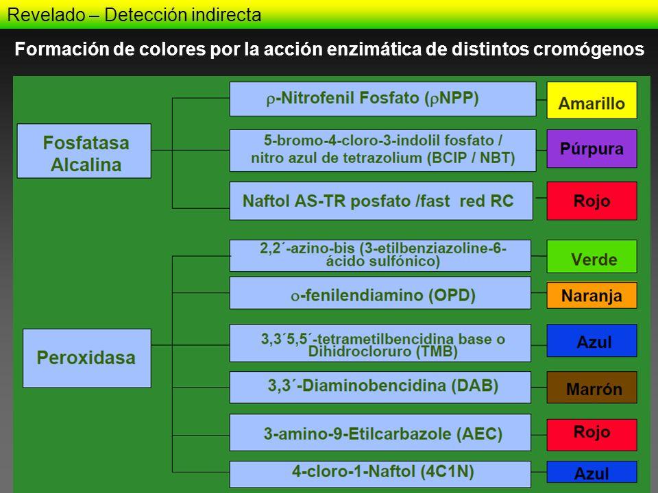 Formación de colores por la acción enzimática de distintos cromógenos