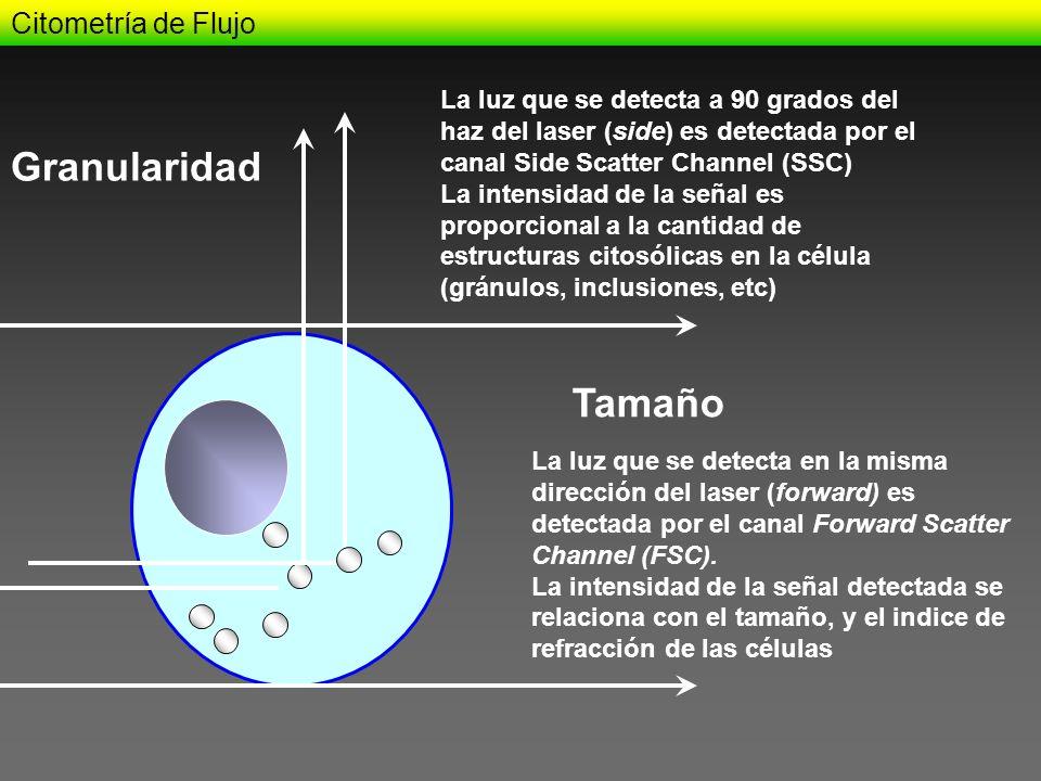 Citometría de Flujo Tamaño Granularidad La luz que se detecta en la misma dirección del laser (forward) es detectada por el canal Forward Scatter Chan