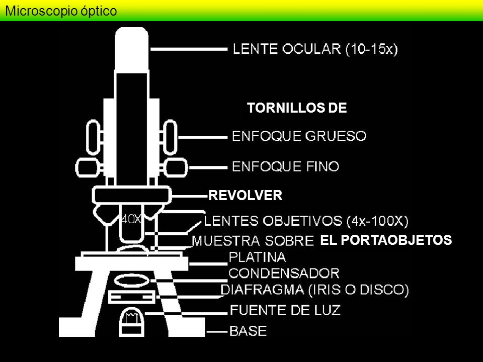Microscopio óptico