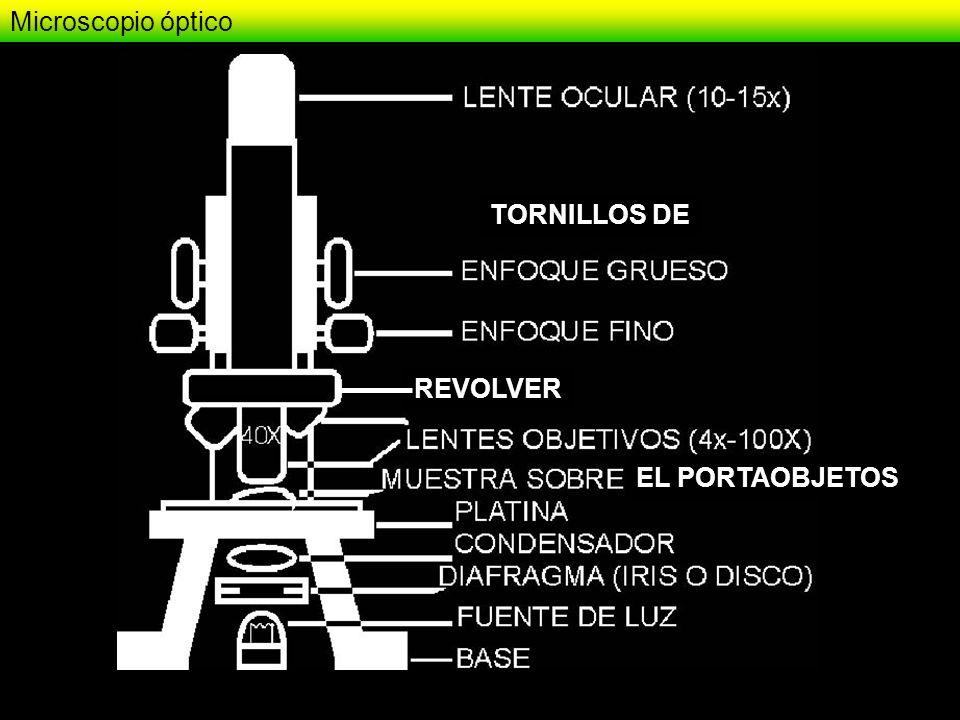 Rodamina Fluoresceina Ficoeritrina DAPI Bromuro de Etidio Naranja de Acridina Inmunofluorescencia
