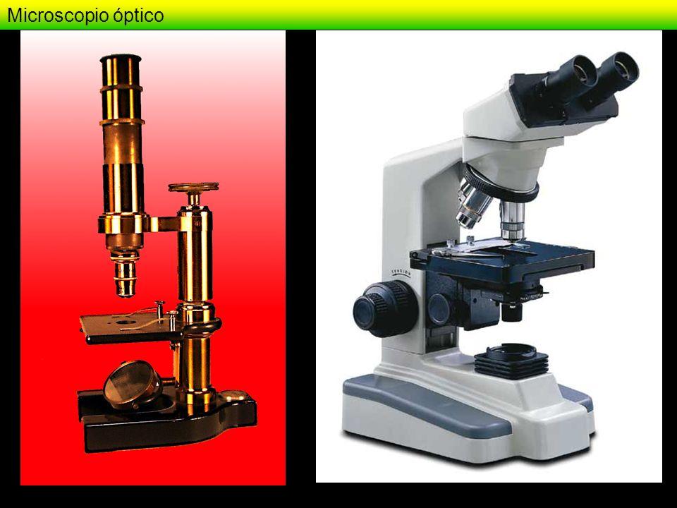 Microscopio óptico - Campo claro - imágenes Eosinofilia