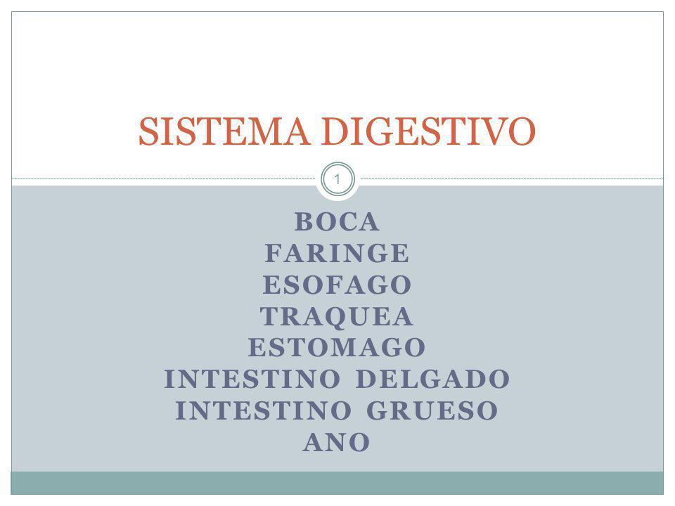 41 La alimentación El aparato digestivo se encarga de digerir los alimentos.