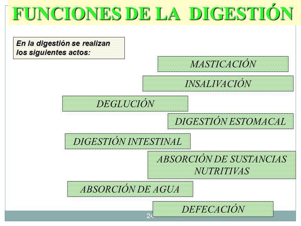 23 Deglución Digestión Estomacal Asimilación Asimilación Masticación. Insalivación Defecación