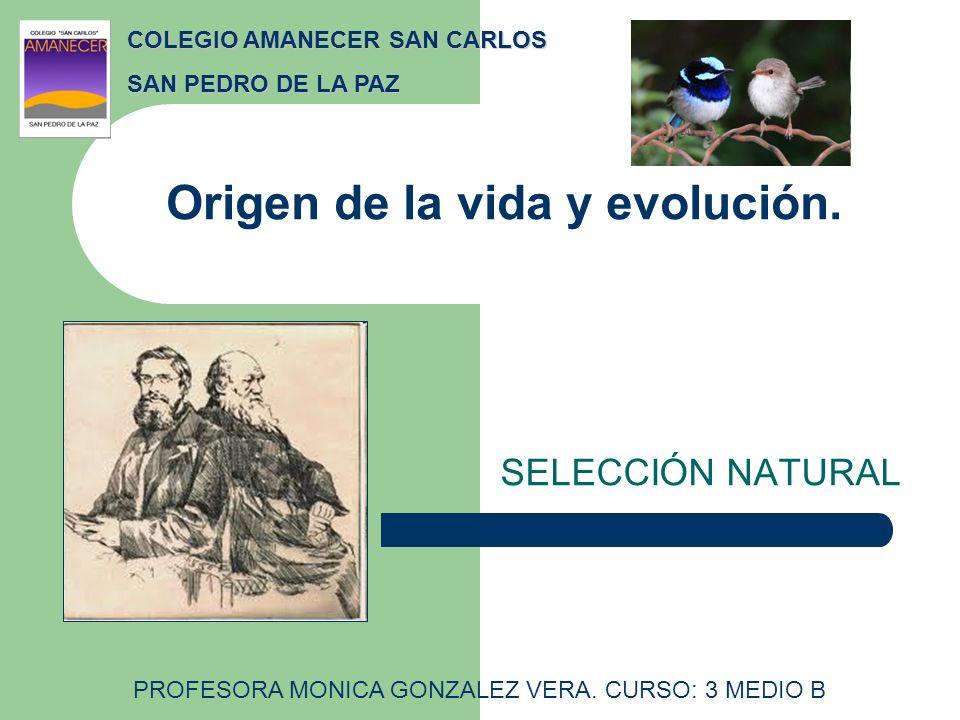Origen de la vida y evolución. SELECCIÓN NATURAL COLEGIO AMANECER SAN CARLOS SAN PEDRO DE LA PAZ PROFESORA MONICA GONZALEZ VERA. CURSO: 3 MEDIO B