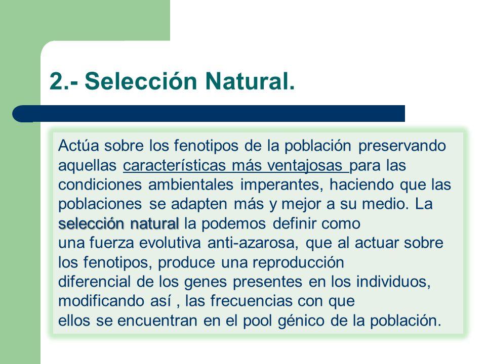2.- Selección Natural. Actúa sobre los fenotipos de la población preservando aquellas características más ventajosas para las condiciones ambientales