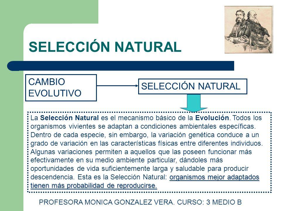 SELECCIÓN NATURAL CAMBIO EVOLUTIVO SELECCIÓN NATURAL organismos mejor adaptados tienen más probabilidad de reproducirse. La Selección Natural es el me
