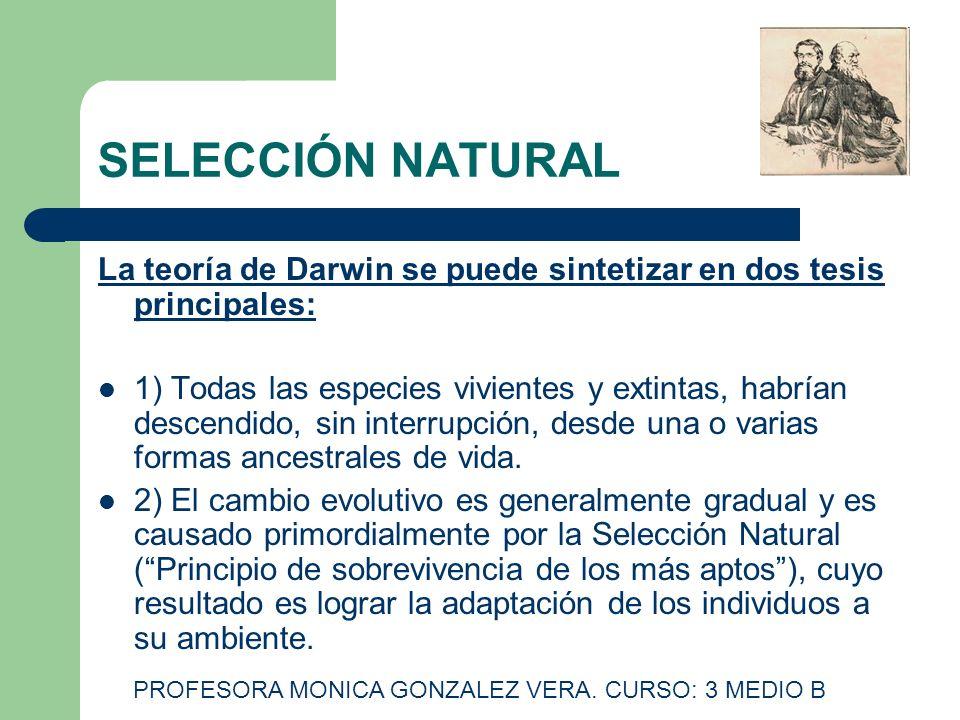 SELECCIÓN NATURAL La teoría de Darwin se puede sintetizar en dos tesis principales: 1) Todas las especies vivientes y extintas, habrían descendido, si