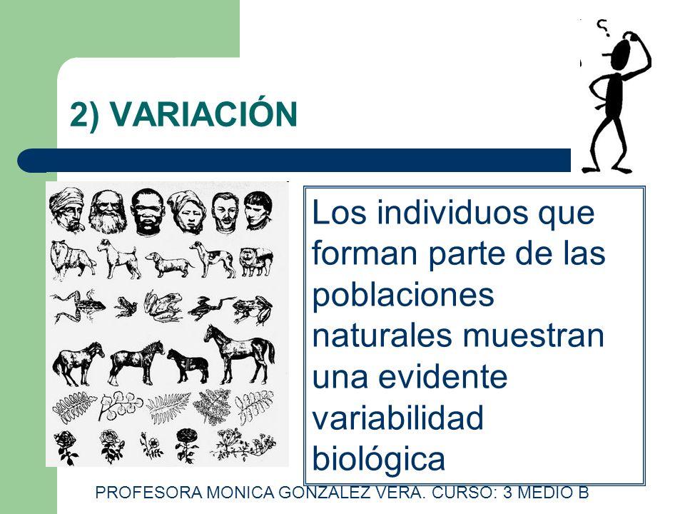 2) VARIACIÓN Los individuos que forman parte de las poblaciones naturales muestran una evidente variabilidad biológica PROFESORA MONICA GONZALEZ VERA.