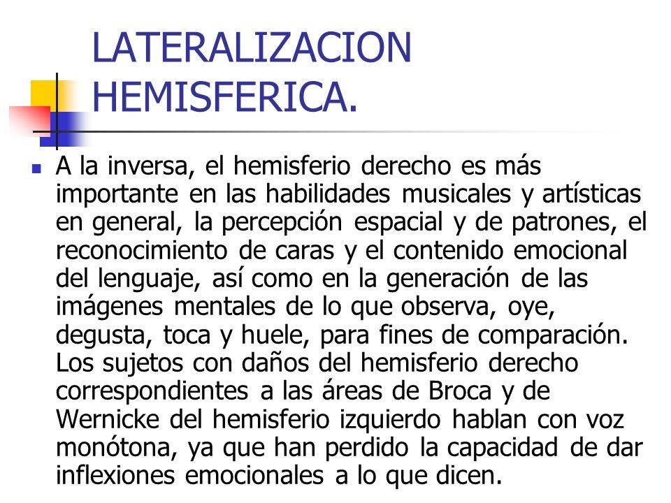 LATERALIZACION HEMISFERICA. A la inversa, el hemisferio derecho es más importante en las habilidades musicales y artísticas en general, la percepción