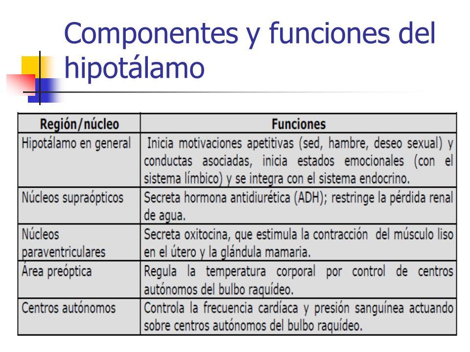 Componentes y funciones del hipotálamo