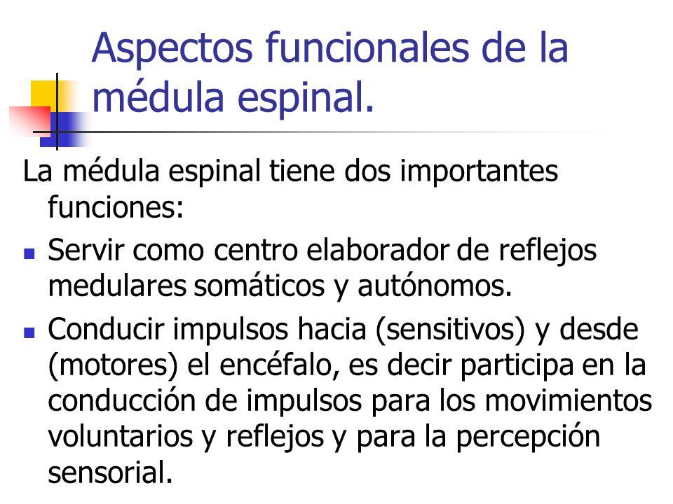 Aspectos funcionales de la médula espinal. La médula espinal tiene dos importantes funciones: Servir como centro elaborador de reflejos medulares somá