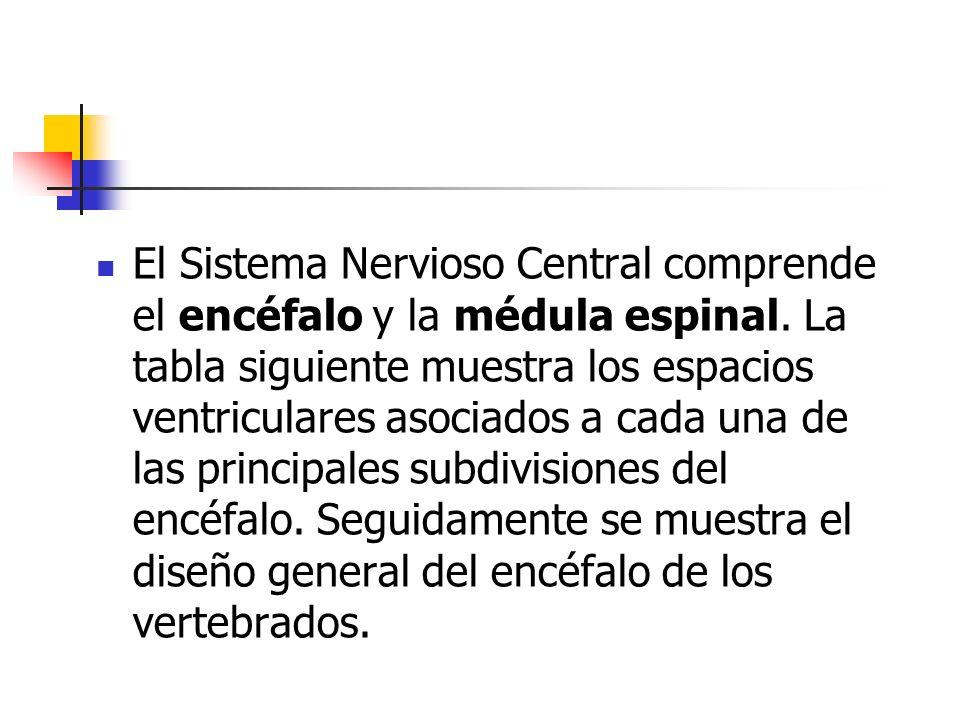 El Sistema Nervioso Central comprende el encéfalo y la médula espinal. La tabla siguiente muestra los espacios ventriculares asociados a cada una de l