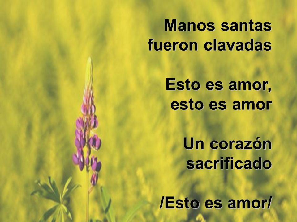 Manos santas fueron clavadas Esto es amor, Esto es amor, esto es amor Un corazón Un corazónsacrificado /Esto es amor/ Manos santas