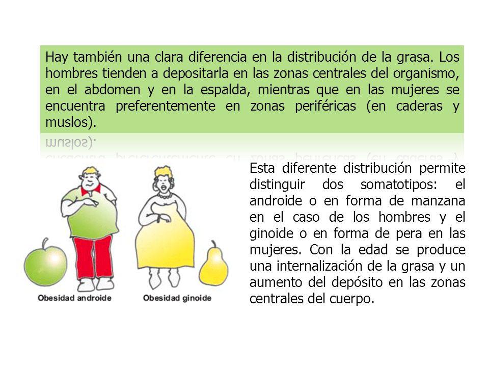 Esta diferente distribución permite distinguir dos somatotipos: el androide o en forma de manzana en el caso de los hombres y el ginoide o en forma de