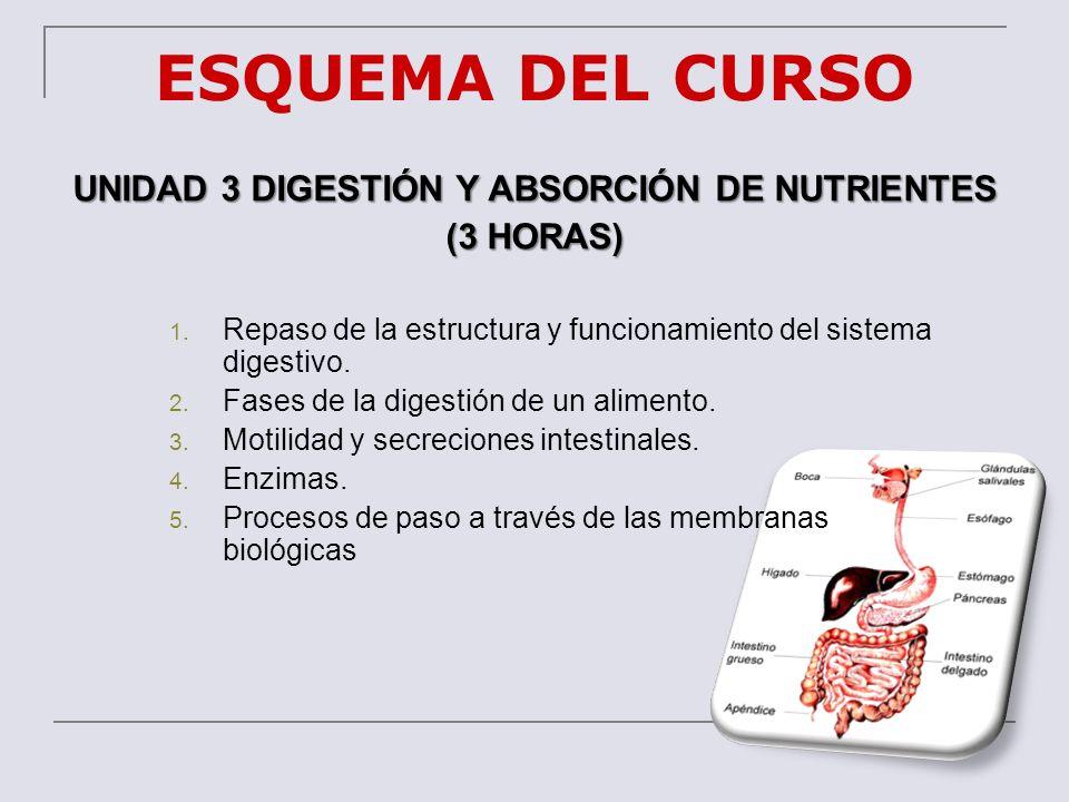 ESQUEMA DEL CURSO UNIDAD 3 DIGESTIÓN Y ABSORCIÓN DE NUTRIENTES (3 HORAS) 1. Repaso de la estructura y funcionamiento del sistema digestivo. 2. Fases d