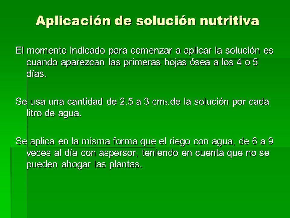 Aplicación de solución nutritiva El momento indicado para comenzar a aplicar la solución es cuando aparezcan las primeras hojas ósea a los 4 o 5 días.