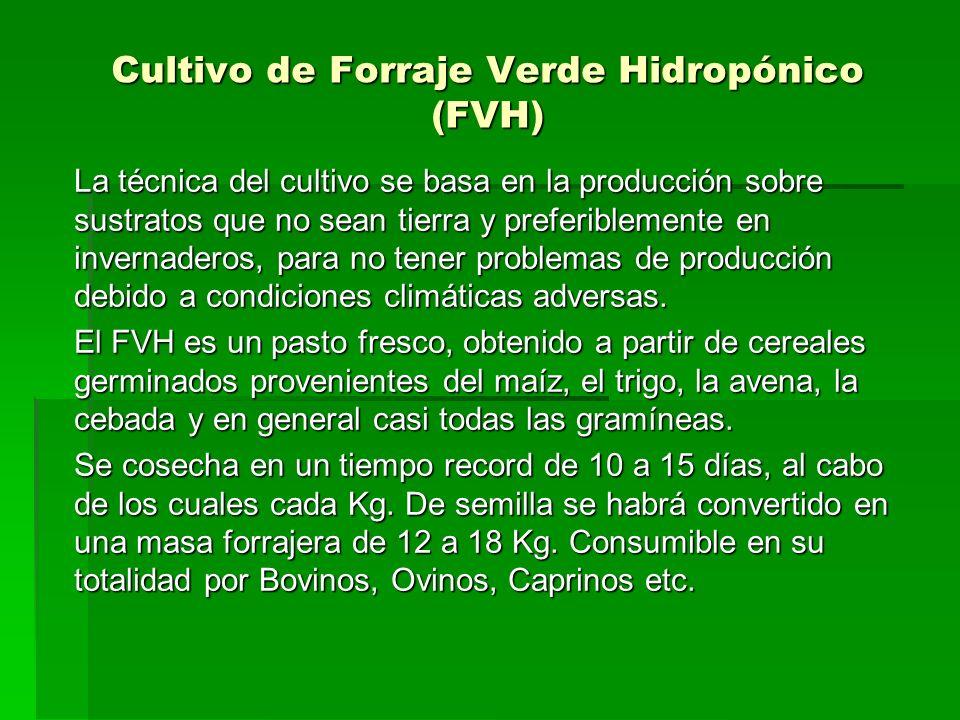 Cultivo de Forraje Verde Hidropónico (FVH) La técnica del cultivo se basa en la producción sobre sustratos que no sean tierra y preferiblemente en inv